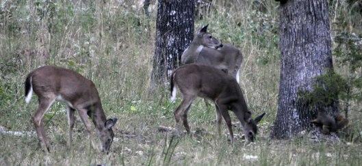 Deer2_DSC1200