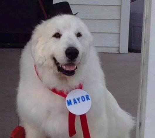 Duke The Dog Mayor (Facebook photo)
